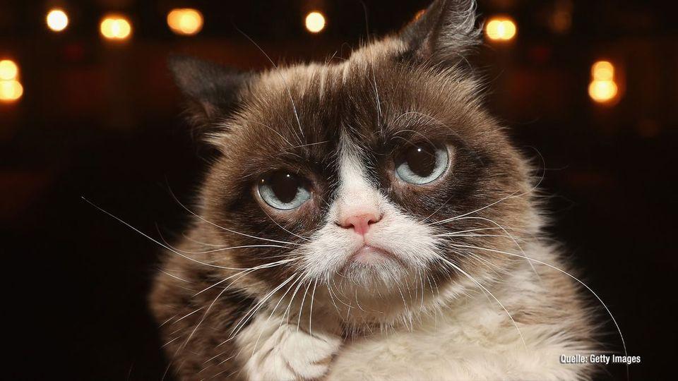 Grumpy Cat ist tot: Social Media trauert um berühmte Katze