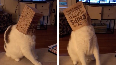 CURIOUS CAT SEARCHING FOR SCRAPS OF FOOD GETS BAG STUCK ON ITS HEAD