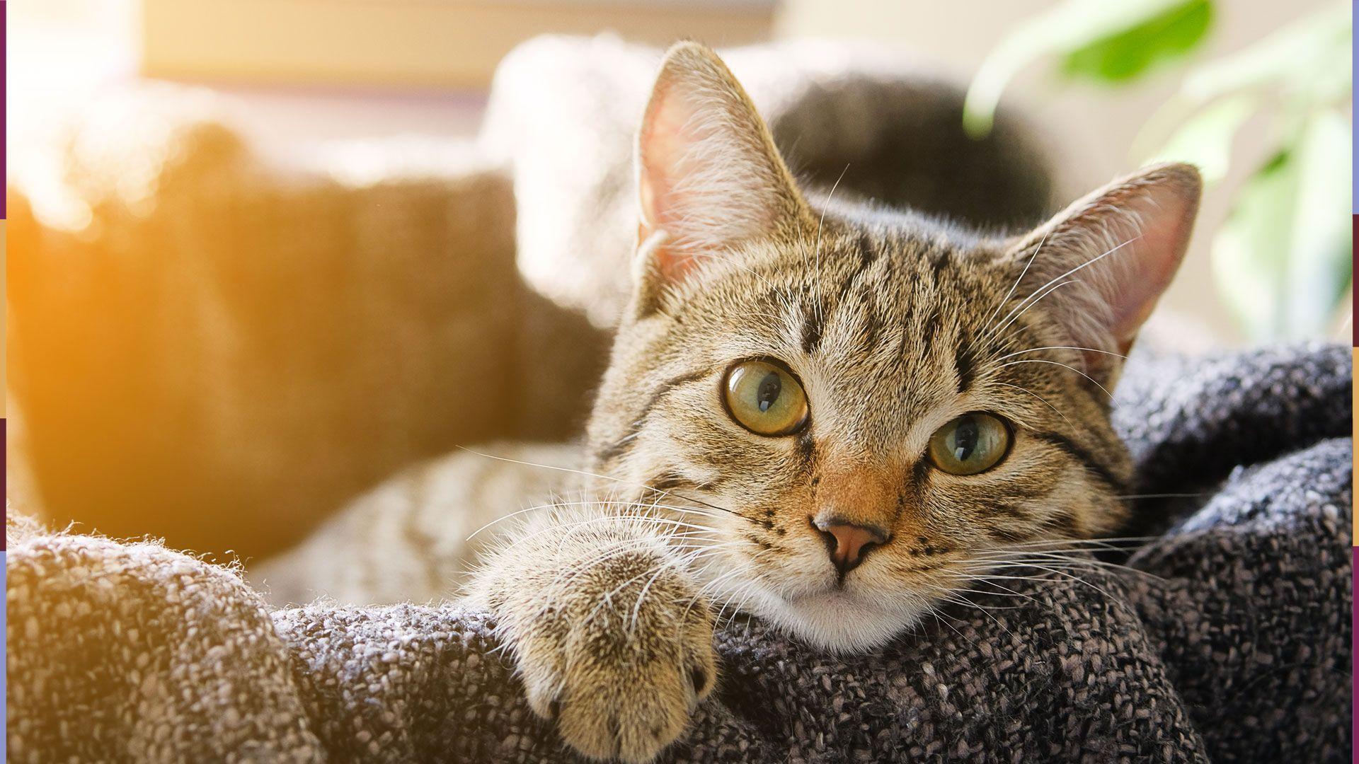 Wenn ihr DIESE 6 Fehler vermeidet, bleibt eure Katze lange gesund!