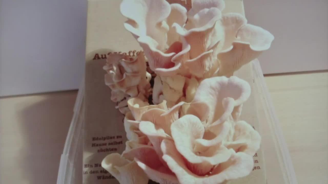 Weihnachts-Geschenke made in Bayern: Pilze zum Selberzüchten und leckere Würzpasten